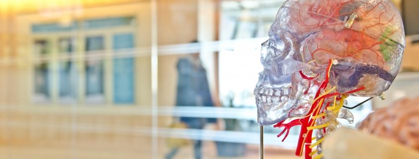 brain, sculpture